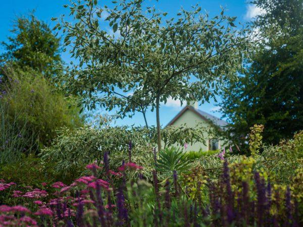 garden landscape design cork